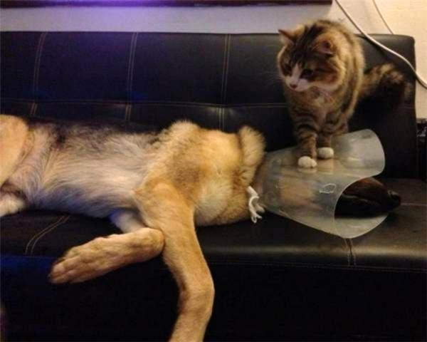 Mèo kia đợi đấy, mai mốt anh mà tháo cái ống đó ra, nhất định anh sẽ… còn chịu thua chú mày dài dài.