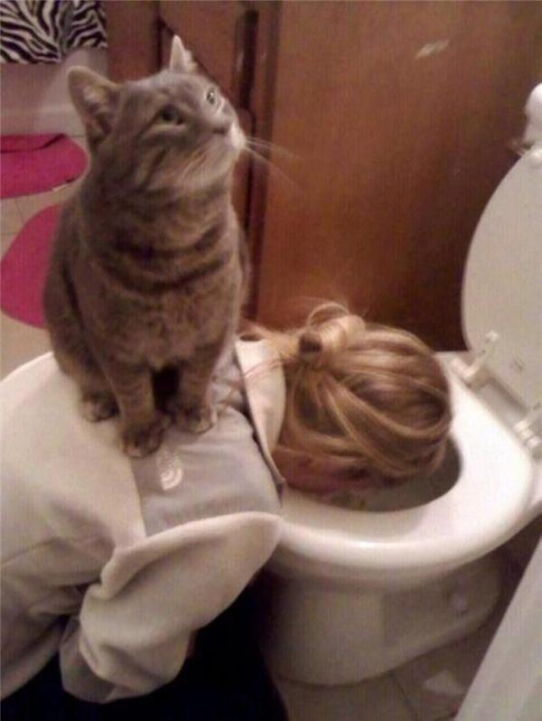 Nuôi mèo làm gì nếu không phải đểbị chúng làm nhục cơ chứ?