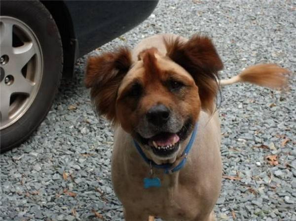Khổ thân con chó không biết mình đã bị biến thành con gì.