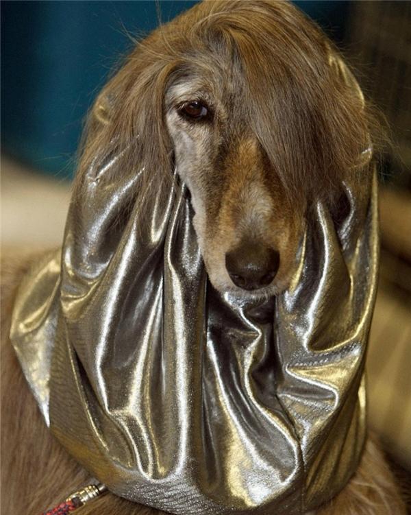 Chỉ cần mái tóc ấy là đã đủ cá tính rồi, không cần thêm cái khăn choàng cổ quằn quại ấy nữa đâu.
