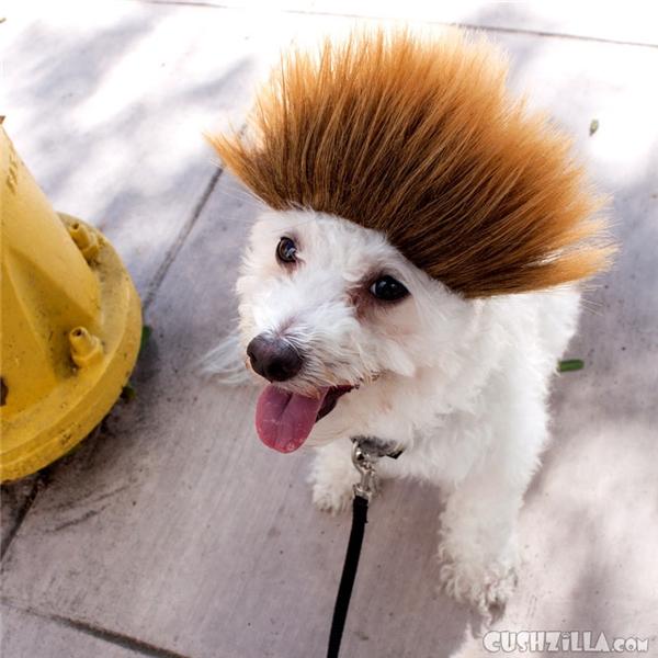 Dù có tóc giả cũng phải phong cách dữ dằn thế này mới chịu.