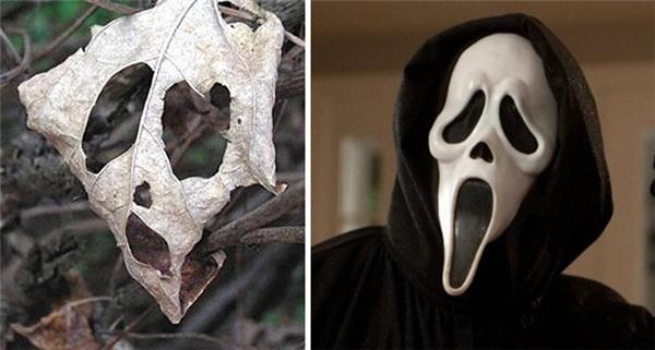 Biểu cảm hết hồn củachiếc lá khô y xì đúc chiếc mặt nạ Scream.