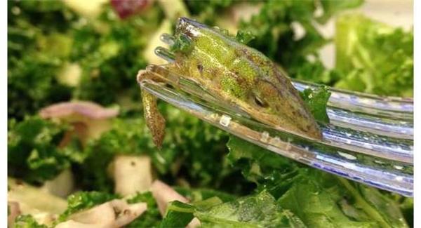 Hãy quan sát kĩ những món salad trước khi ăn bạn nhé, biết đâubạn ăn nhầm kì nhông mà tưởng là rau đấy.
