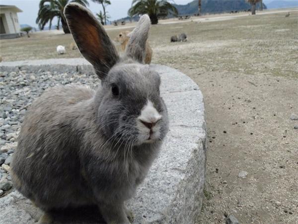 """Nếu bạn nghe thấy ai lẩm bẩm """"thỏ, thỏ"""" hoặc """"thỏ trắng"""" vào ngày đầu tiên của tháng, người đó có thể là người Anh hoặc Mỹ, nơi tin rằng điều này đem lại một tháng thịnh vượng."""