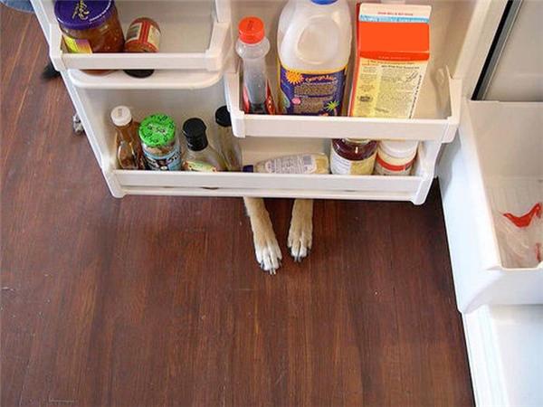 Đứa nào vừa mở tủ lạnh và ăn trộm cây xúc xích rồi? Cái đứa đó nó trốn ở đâu rồi, có ai biết không?