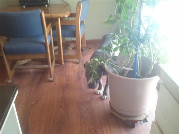 Không biết nó trốn ở đâu mà tìm hoài chỉ thấy có mỗi cái chậu hoa thôi.