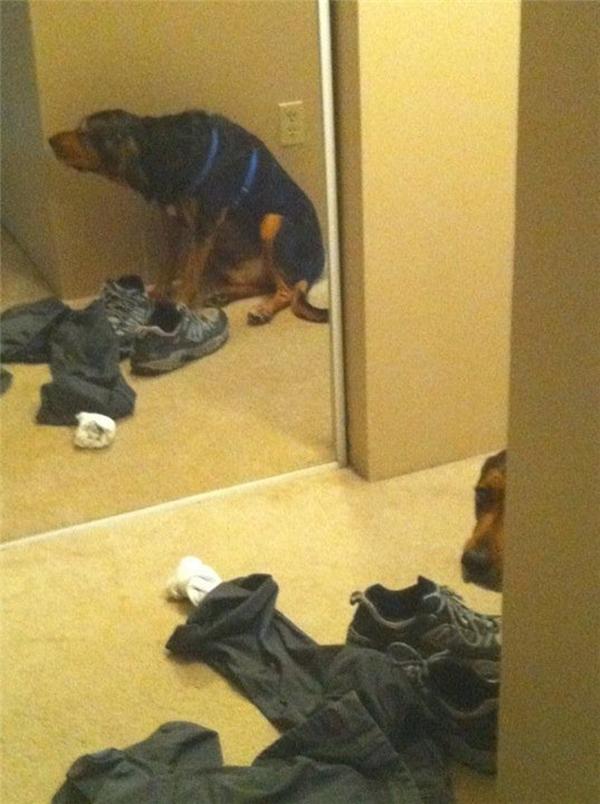 Hừm, nó trốn đâu mà kĩ thế không biết. Thấy hình nó trong gương mà không thấy nó đâu hết trơn à.
