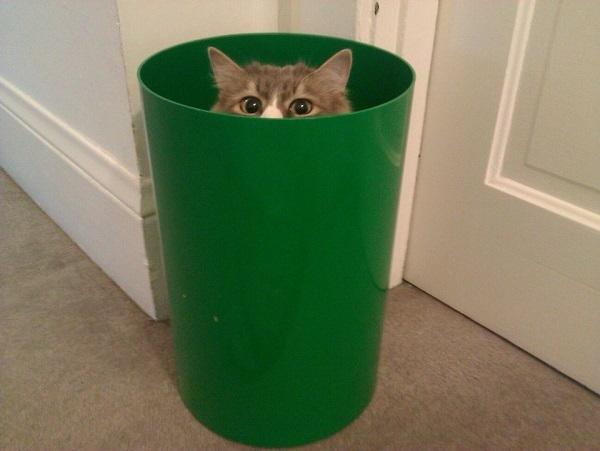 Lúc nãy mới đi ngang qua cái thùng rác mà có thấy con mèo nào trốn trong đó đâu nhỉ.