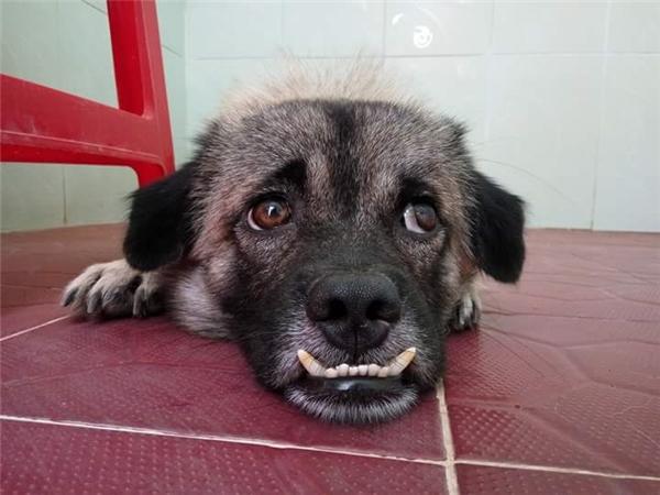Em cũng muốn được niềng răng. Em cũng muốn có người yêu.(Ảnh: Internet)