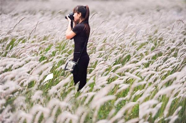 Cô gái trẻ và cánh đồng hoa lau. Đẹp thế này thì còn gì bằng nữa.(Ảnh: Internet)