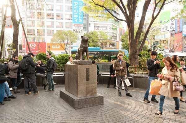 Bức tượng về chú chó trung thànhHachiko đã được dựng tạinhà ga Shibuya để ghi nhớ câu chuyện của chú chó với người chủ của mình.(Ảnh Internet)