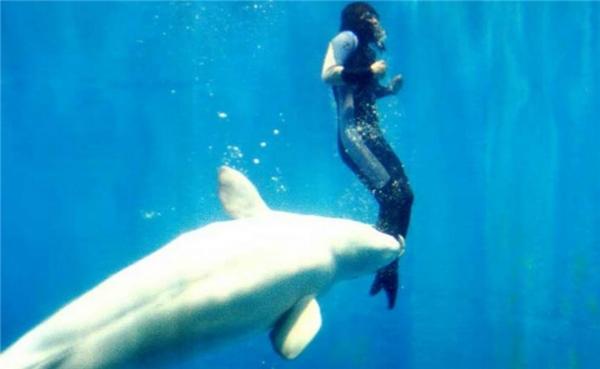 Chú cá voi Mila đã đưacô Yang Yun lên khỏi mặt nước an toàn. (Ảnh: Internet)