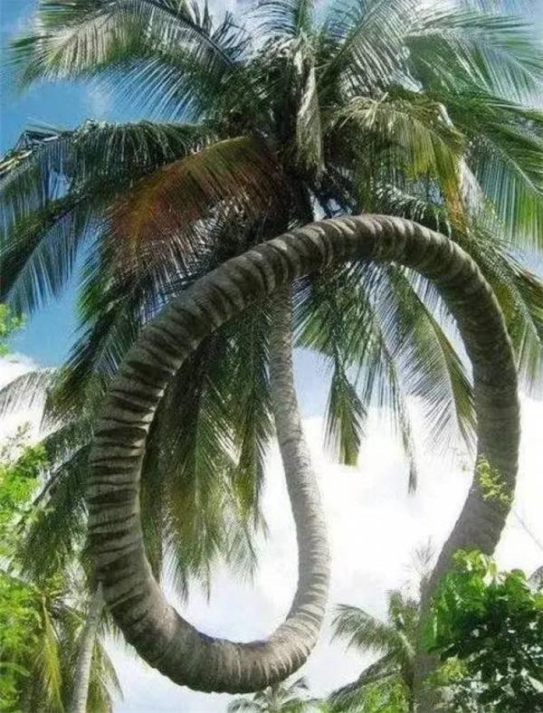 Nhìn cái cây này thì hẳn là cuộc đời nó gặp nhiều phong ba bão táp lắm đây.