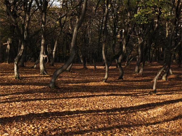 Rừng Hoia, nơi được cho là cóma cà rồng xuất nhiều nhất trên thế giới