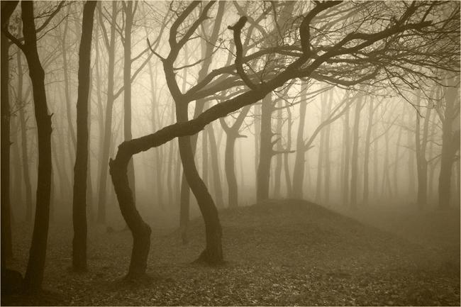Những chiếc gai hay gỗ cây được cho là ẩn chứa một loại sức mạnh bóng tối nguy hiểm mà cả ma cà rồng cũng phải e sợ.