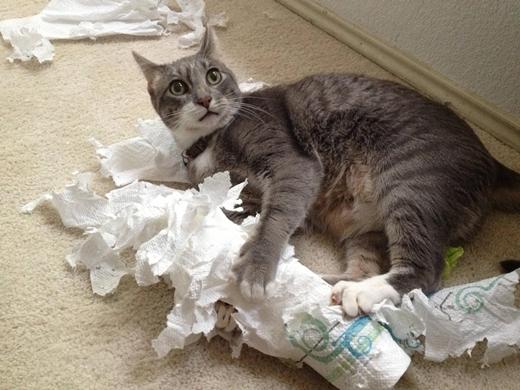 Mèo thực sự tin rằng giấy vệ sinh là đồ chơi trong phòng tắm của riêng chúng và cực kì thích thú với việc kéo giấy ra ngoài.