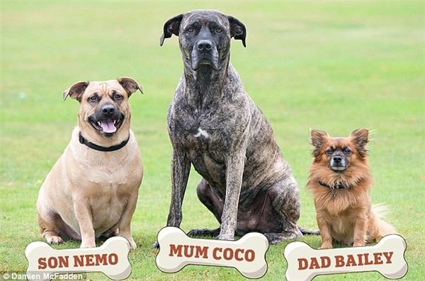 Thoạt nhìn chắc chắn ai cũng nghĩ đây là một gia đình cún bình thường cho đến khi đọc những dòng chú thích bên trên bức ảnh.