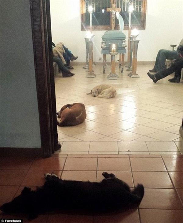 Những chú chó hoang đột ngột xuất hiện tại tang lễ của bà Margarita.(Ảnh: Facebook)