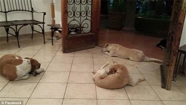 Người nhà của bà và người dân sống trong khu đã quá quen thuộc với hình ảnh bà cho chó mèo hoang ăn vào mỗi buổi sáng.(Ảnh: Facebook)