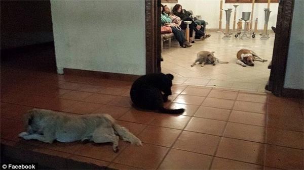 Gia đình bà Margarita vừa ngạc nhiên vừa xúc động trước hành động tình nghĩa của bầy chó hoang.(Ảnh: Facebook)
