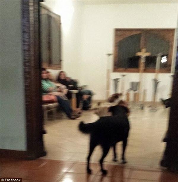 Bầy chó nằm lặng lẽ bên quan tài của ân nhân.(Ảnh: Facebook)