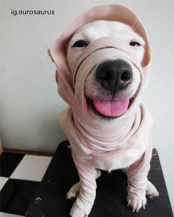 Euro là một cô chó thuộc giống Jack Russell, hiện đang sống cùng cô chủ tại Thái Lan.
