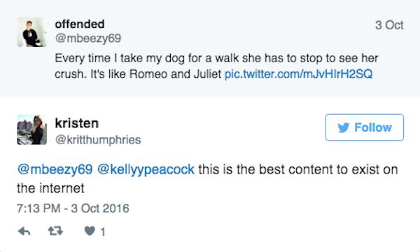 Chuyện tình hàng rào cực dễ thương của hai em cún đẹp trai xinh gái