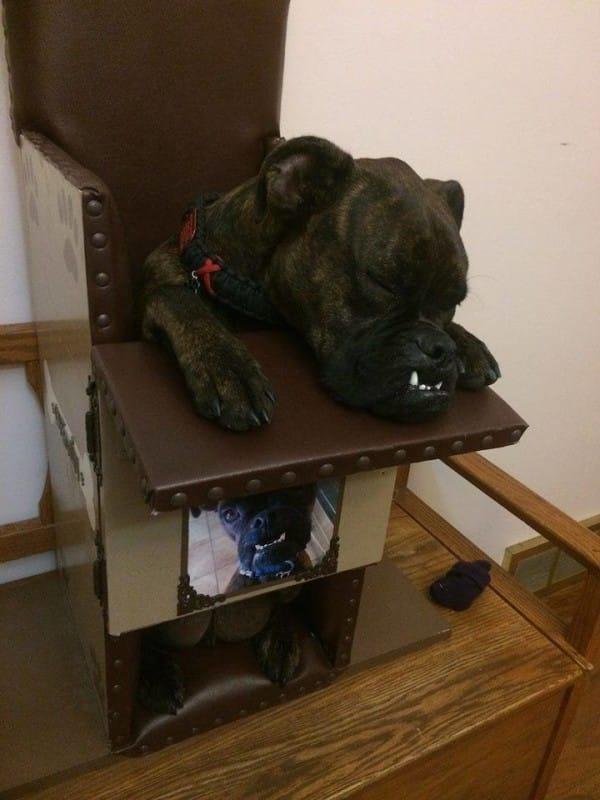 Gremlin ngủ trưa trên chiếc ghế của mình.
