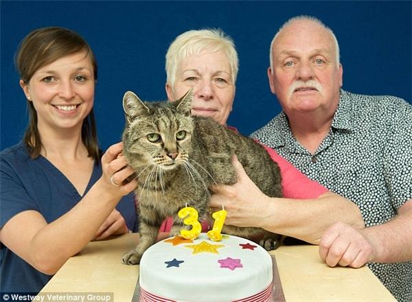 Nếu như đúng 31 tuổi, Nutmeg sẽ trở thànhcon mèo già nhất thế giới vẫn còn sống, tương đương 141 tuổi thọ ở người.