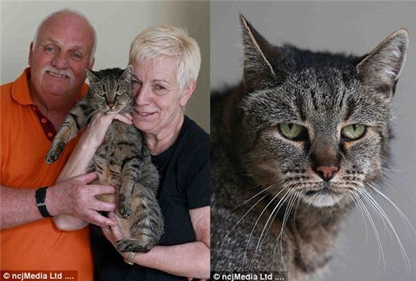 Nutmeg là chú mèo đi lạc được ông bàLiz vàIan Finlay nhận nuôi cách đây 26 năm.