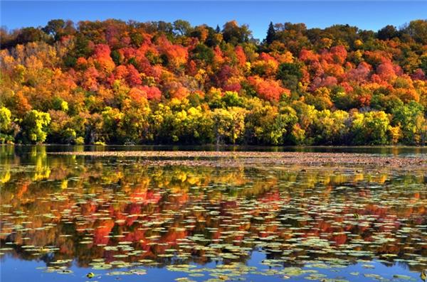 Lilydale, Minnesota: Nếu đến Minnesota vào mùa thu, hãy ghé qua thành phố Lilydale ở hạt Dakota để chiêm ngưỡng vẻ đẹp của rừng cây thay lá bên hồ.