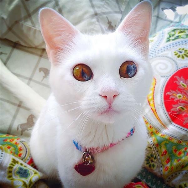 Không giốngvới các anh chị mèo ở trên, điều mà mà người ta chú ý nhất ở bé mèo này là đôi mắt đa sắc hiếm có. Màu mắc kì lạ cùng ánhnhìn thiêu đốtnhư chứa một tiểu vũ trụ trong đó, khiến ai cũng phải đắm chìm.