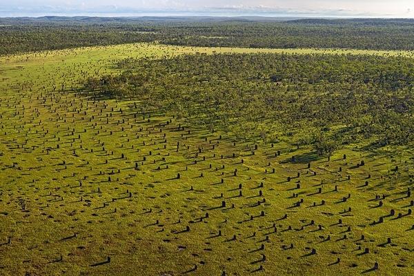 """Mối La Bàn- Những """"ngôi nhà khổng lồ"""" xây trùng với từ trường Trái Đất một cách kì lạcủa mối La Bàn được tìm thấy ở khu vực phía Bắc nước Úc, trong vườn quốc gia Litchfield, gần thị trấn Batchelor."""