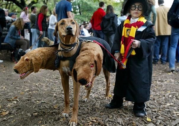 Cặp đôi lạc quẻ nhất mùa lễ hội:cậu bé phù thủy Harry Potter và chó ba đầu Cerberus.