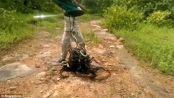 Người bắt rắn có tênSalem Khan cho rằng rắn là bạn, không phải kẻ thù của con người.(Ảnh: Newslions)