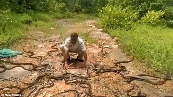 Ông thường giải cứu khoảng 100 – 200 con rắn mỗi tháng.(Ảnh: Newslions)