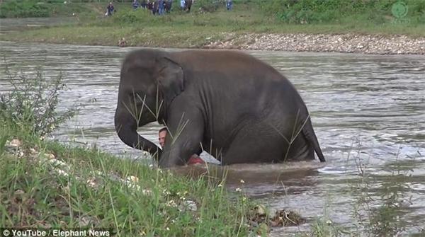 Kham Lha dùng vòi và chânđưa chủ vào bờ an toàn.