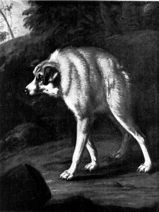 Bức vẽ của tác giảDavid Klöcker Ehrenstrahl về trường hợp chó xương sống ngắn đầu tiên trên thế giới xuất hiện vào thế kỉ 17. (Ảnh: Internet)