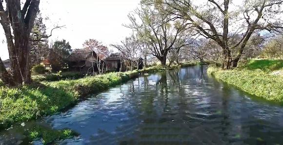 Wasabi mọc rải rác dọc các dòng suối chảy qua các thung lũng ở Nhật.