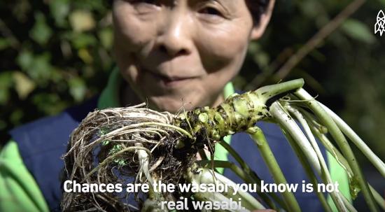 Wasabi thật sựkhá hiếm,giá thành đắt tiền và nhu cầu sử dụng cao.
