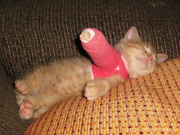 """""""Ai bảo đau một chân thì không ngủ xả láng được chứ!"""""""