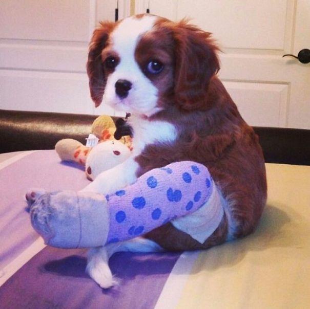 """""""Đây là chân mới kiêm quần mới của tớ""""."""