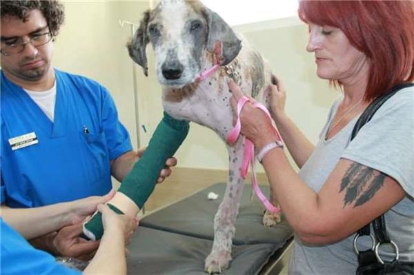 Mọi người tích cực điều trị cho chú chó.(Ảnh: Internet)