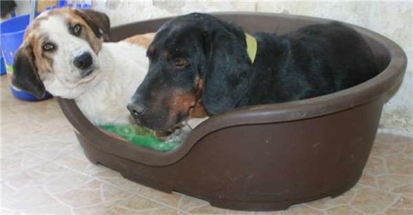 Sự hồi phục của chú chó bị ngược đãi cho thấy điều kì diệu là có thật