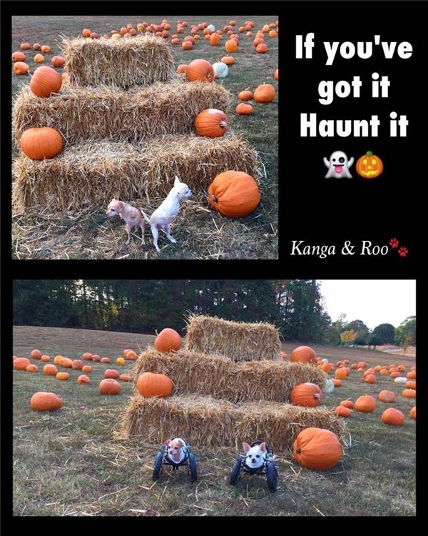 Kanga & Roo: Cặp anh em cún cụt chân gây sốt cộng đồng mạng