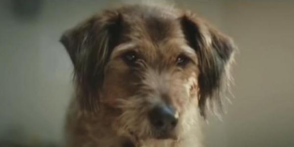 Sau một thời gian chủ nhânrời đi, chú chó được một nhà hảo tâm giúp đỡ, đưa chú vào trung tâm nuôi dưỡng