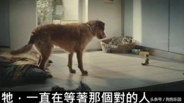 Hình nộm trở thành người bạn luôn bên cạnh chú chó.