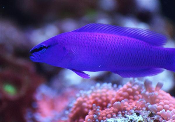 Chúng sinh sống chủ yếu trong những con nước nhiệt đới ở độ sâu 60m.