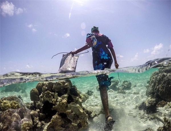 Khi du khách trở về nơi nghỉ ngơi cũng là lúc các thợ săn bạch tuộc bắt đầu hành trình của mình.