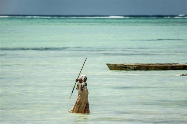 Kể từ khi nghề săn bạch tuộc mang lại thu nhập cao khiến nhiều người đàn ông cũng đổ xô đi làm công việc này.